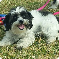 Adopt A Pet :: Willow - San Dimas, CA