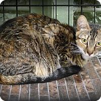 Adopt A Pet :: Elena - Marlinton, WV