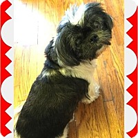 Adopt A Pet :: MAGDA - SO CALIF, CA