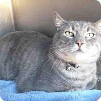 Adopt A Pet :: CESAR - Norco, CA