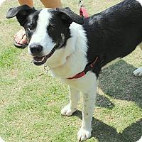 Adopt A Pet :: Roscoe - All Cities, SC