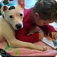 Adopt A Pet :: Gracie - Villa Park, IL