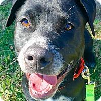 Adopt A Pet :: Bruce Wayne - Mission Viejo, CA