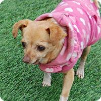 Adopt A Pet :: Penelope - Creston, CA