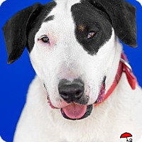Adopt A Pet :: Snoopy aka Snoop Dogg - Yoder, CO