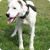 Adopt A Pet :: Zeus - Salem, NH