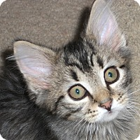 Adopt A Pet :: Boyertown Brothers - Colmar, PA