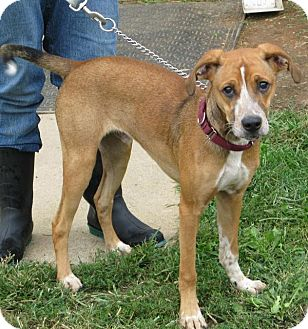 Hound (Unknown Type) Mix Dog for adoption in Richmond, Virginia - Jay