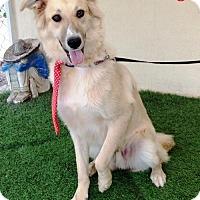 Adopt A Pet :: Kirby - San Diego, CA