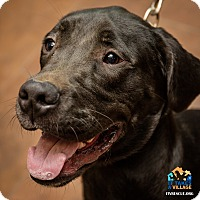 Adopt A Pet :: Moose - Evansville, IN