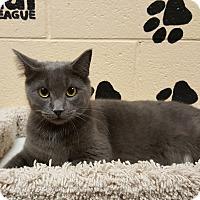 Adopt A Pet :: Scout - Smithfield, NC