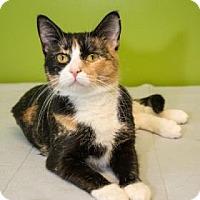 Adopt A Pet :: Amber - Neenah, WI