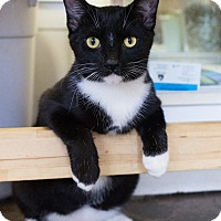 Adopt A Pet :: Avion - Montclair, CA