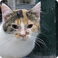 Adopt A Pet :: Wendy - Grinnell, IA