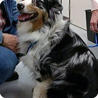 Adopt A Pet :: Wyatt - Wilton, NY
