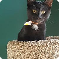 Adopt A Pet :: Comet - Brownsburg, IN