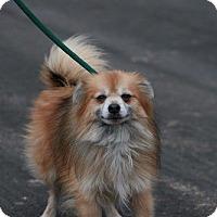 Adopt A Pet :: Kusty - Batavia, NY