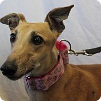 Adopt A Pet :: Double Check - Carol Stream, IL