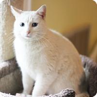 Adopt A Pet :: Nikki - Dalton, GA