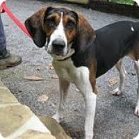 Adopt A Pet :: Bobo - Brattleboro, VT
