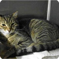 Adopt A Pet :: Fellow - Warminster, PA