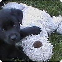 Adopt A Pet :: Nina - CHESTERFIELD, MI