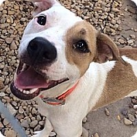 Adopt A Pet :: Lilly - Forreston, TX