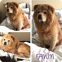 Adopt A Pet :: FAWN - Dix Hills, NY