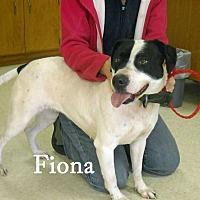 Adopt A Pet :: Fiona - Halifax, NC