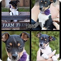 Adopt A Pet :: Emma - West Richland, WA