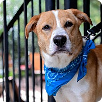 Adopt A Pet :: Gunther - Baton Rouge, LA
