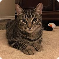 Adopt A Pet :: Marcus (aka Imperius) - Yorba Linda, CA