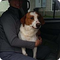 Adopt A Pet :: Tripp - Summerville, SC