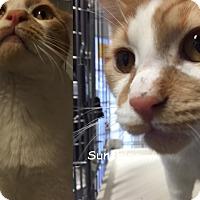 Adopt A Pet :: SUNSHINE - Cliffside Park, NJ
