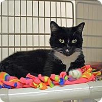 Adopt A Pet :: Frankie - Sherwood, OR
