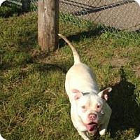 Adopt A Pet :: Gardulla - Cleveland, OH