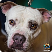 Adopt A Pet :: Suzie Q - Evansville, IN