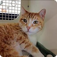 Adopt A Pet :: Socrates - Duluth, MN