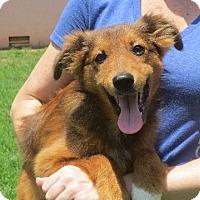 Adopt A Pet :: Daley - Allentown, PA