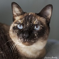 Adopt A Pet :: Giselle - Los Angeles, CA