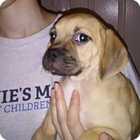 Adopt A Pet :: Myra - Venice, FL