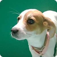 Adopt A Pet :: CHASITY - Terre Haute, IN