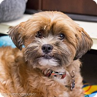 Adopt A Pet :: Ollie - Grand Rapids, MI