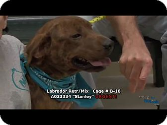 Plott Hound Mix Dog for adoption in Newnan City, Georgia - Stanley
