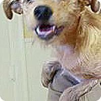 Adopt A Pet :: Free Bird - Scranton, PA