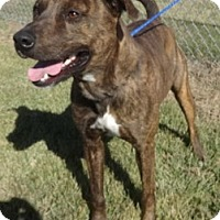 Adopt A Pet :: Jethro - Olive Branch, MS