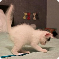 Adopt A Pet :: Rabble - Austin, TX