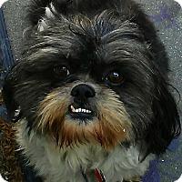 Adopt A Pet :: Andy - Thousand Oaks, CA