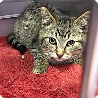 Adopt A Pet :: Roo - Richboro, PA
