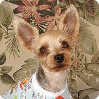Adopt A Pet :: Sheldon - Palm City, FL